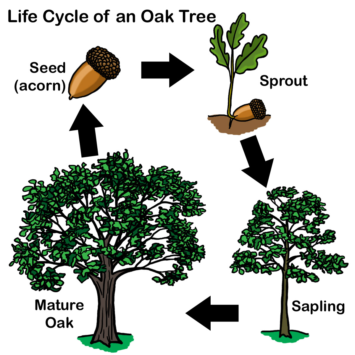 aisdprekshare / Tree Homes Unit Resources